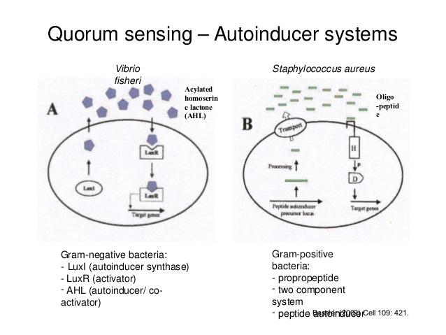 quorum-sensing-in-bacterial-populations-3-638.jpg