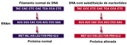 dna-proteina
