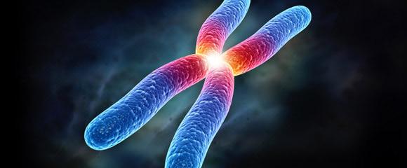 fullsize-cromossomas-580