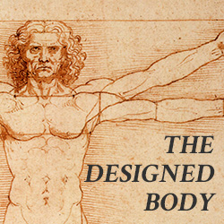the-designed-body4