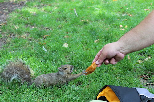 1024px-20120623_Sqwiki_the_Squirrel_at_Wiknic.JPG
